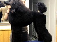 grooming_work_009_025